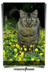 Namir (AKA Cecep) (AnNamir™ c[_]) Tags: flower cute cat fun kitten kucing fotoarte namir cecep fineartphotos flickraward keledek annamir klipis mwqio