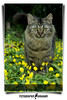 Namir (AKA Cecep) (AnNamir™ c[_]) Tags: flower cute cat fun kitten kucing fotoarte namir cecep fineartphotos flickraward keledek annamir klipis mwqio