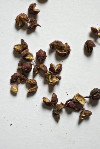 Szechuan Peppers