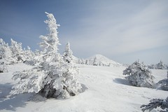 (jasohill) Tags: winter mountain snow japan forest photography eos 350d japanese big canon350d aomori backgrounds hakkoda  plains landscpae   2009 tohoku jasonhill touhoku   aplusphoto fotocompetition fotocompetitionbronze
