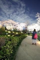 Sakura - Night shot of RoppongiHills, 02