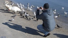 Enthusiastic (Irina Kiseleva) Tags: ocean blue red people ny man black reflection water colors birds sand photographer shadows gray swans repetition farrockaway whute naturepeople