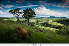Valley (Dante Laurini Jr) Tags: flowers trees sunset brazil sky cloud sun mountain plant mountains flower tree