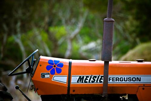 """""""Meisie"""" Ferguson - seen in Kommetjie"""