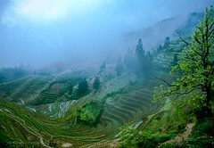 Earth Day 2009 (jon.noj) Tags: china travel misty interestingness moody guilin foggy explore fp frontpage cgb 2009 splendidchina earthday guangxi interestingness7 nikond80 jonnoj longshengriceterraces longshengcounty jonbinalay