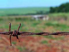 Arame Farpado / Barbed Wire (Fabiano_Florentin) Tags: macro wire rust close barbed ferrugem perto arame farpado