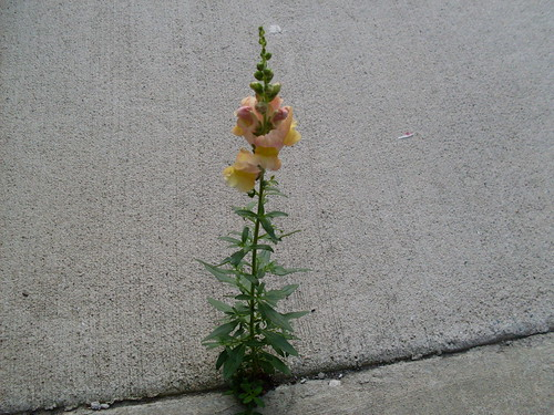 A flower grows on a patio