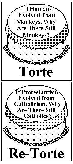 Torte/Re-Torte