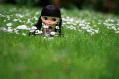 Hidden (F l e u r) Tags: flower berlin green nature grass daisies germany doll daisy blythe tiergarten nightflower