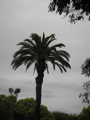 Pleasanton Palm Trees! LOL!