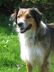 Farmer doggy (jnoc) Tags: massachusetts montague paperroute montaguereporter