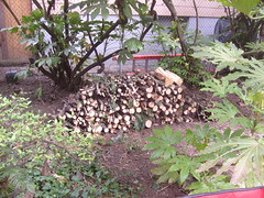 The wood from the debris in the yard. (pieisexactlythree) Tags: home yard garden weeds blackberry ivy patio