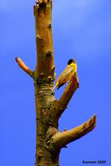 Single (kezwan) Tags: bird kezwan
