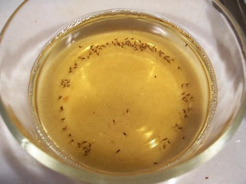 How To Get Rid Of Fruit Flies Mama S Weeds