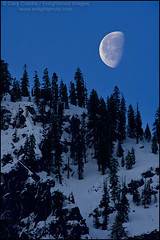 Winter Moonset at dawn, Yosemite (enlightphoto) Tags: california blue trees winter wild sky moon mountain snow cold west nature vertical season landscape outside outdoors dawn scenery view natural scenic scene ridge western vista environment yosemitenationalpark sierranevada lunar ridgeline moonset yosemitevalley gibbousmoon colorphotoaward garycrabbe enlightenedimages enlightphotocom platinumheartaward