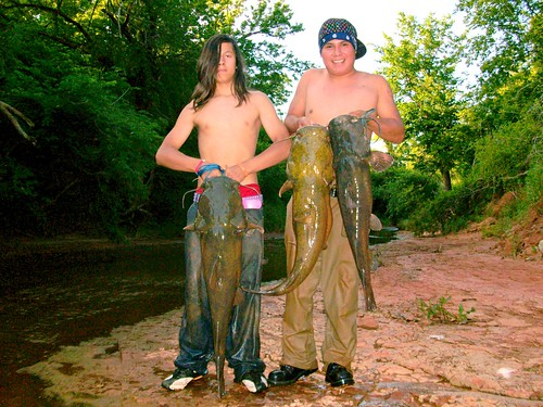 Catfish+noodling+pictures