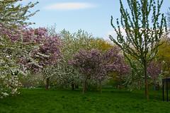 Frühling im Regent's Park (jens.greitemann) Tags: park england london unitedkingdom urlaub baum regentspark frühling frhling london2009