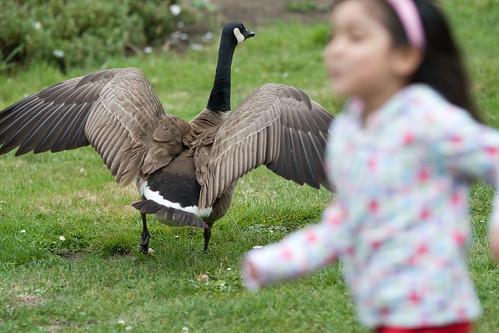 Girl Girl Goose  - 2