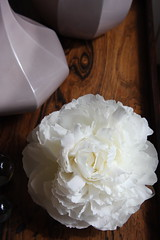 white peony (Pepa Amenabar) Tags: wood lilac wedgwood whitepeonie
