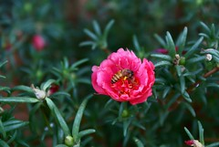I've a job (asis k. chatt) Tags: nature naturephotography flowerinsect naturalharmony naturewatcher