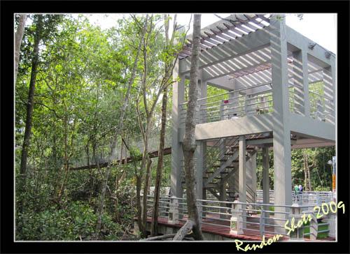 Mangrove 8