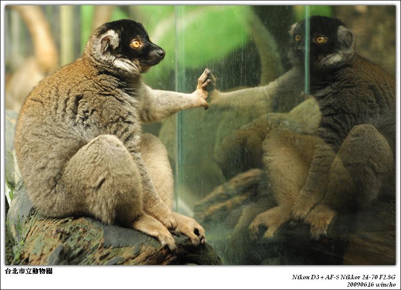 久違的台北市立動物園