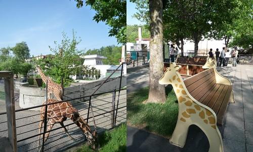 你拍攝的 旭山動物園6。