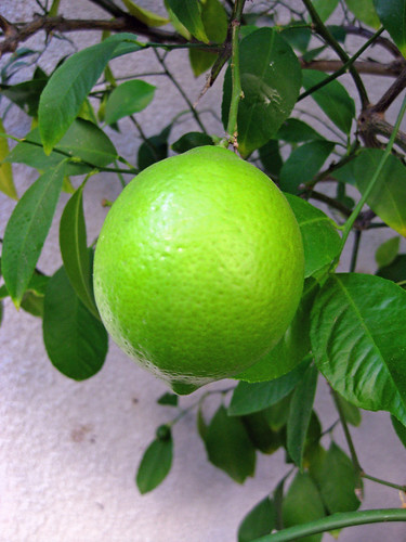 Garden- Middle Sized Lemon