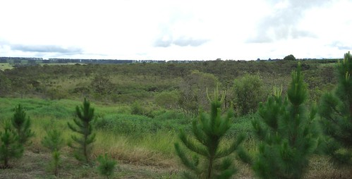 Typical Cerrado vegetation