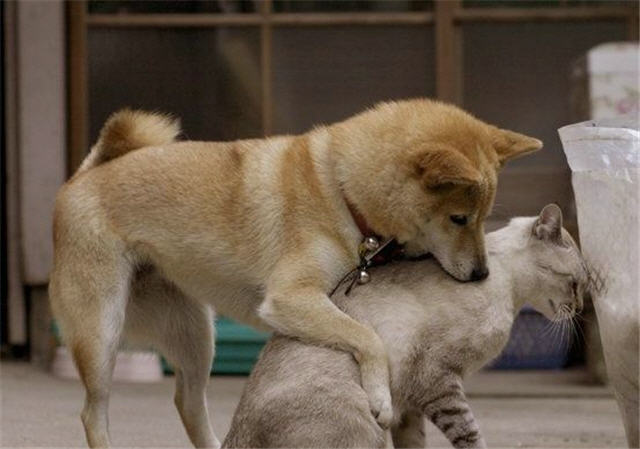 cats&dogs_04