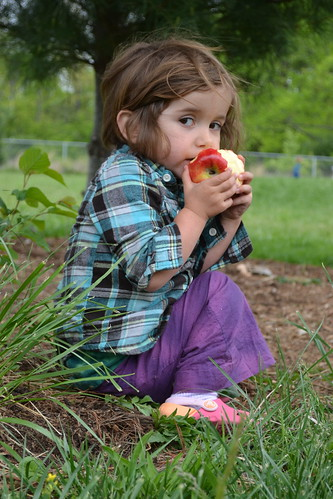 apple eater by ellajohn