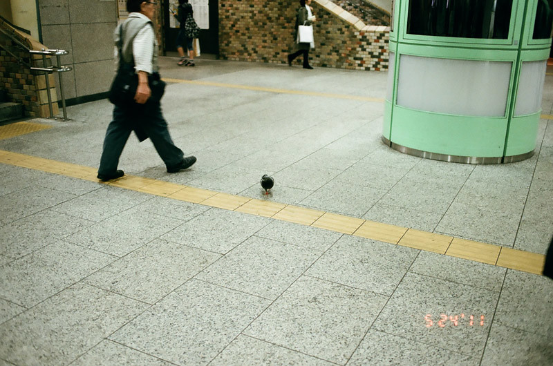 PigeonShinjukuStation (5 of 13)