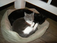 Morris and Ms. Kitty (hungryphotographer) Tags: animals kitties napping lounging