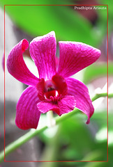Purple (juzz_arisuta) Tags: red flower nature beautifulflower 50d