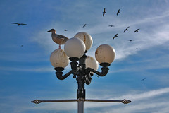 Time out... (**Anik Messier**) Tags: uk england birds sussex brighton britain gull angleterre soe oi