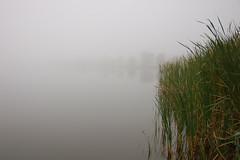 DSC_1579 (mdpayne) Tags: fall boston ma picis october2007