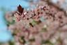 LA ABEJA SALIENDO DEL TRABAJO (yoymicaballo) Tags: abejas primavera spring bee abeja palencia tierradecampos fuentesdenava abeeworking