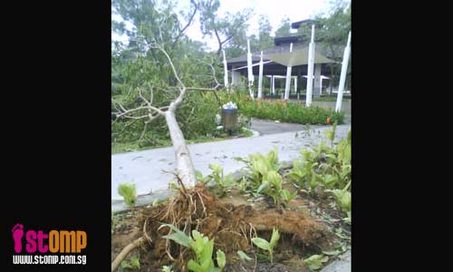 Over 30 trees at Jurong West parks uprooted in thunderstorm
