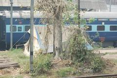 Delhi Squatter