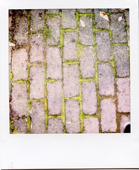 Mossy path (Jim Davies) Tags: film polaroid sx70 spring ishootfilm 600 instant analogue 2009 ndfilter veebotique filmfilmforever