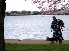Man in Kimono with Dog in Bunny Ears by Tidal Basin at the Cherry Blossom Festival