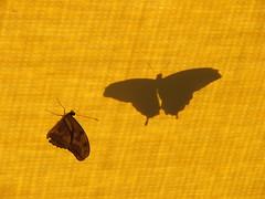 Butterflies at the Desert Botanical Gardens