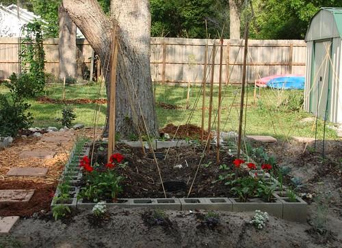 zuccini and sumer squash garden