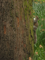 sin mover las manos (tnarik) Tags: tree london squirrels greenpark londres árbol ardilla ardillas rbol