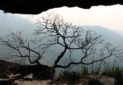 Tree of life on the way down from Ghandruk (thapa.laxman) Tags: nepal kathmandu pokhara laxman ghandruk kaski laxmanthapa