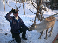 Kirkenes Reindeer Park Resort in Norway #3