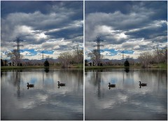 Tomlinson Park (CrossView 3D) (patrick.swinnea) Tags: park trees sky lake reflection water clouds reflections geese 3d crosseye colorado arvada brids crossview xview