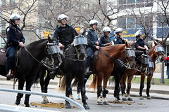 Horseys! (pink champagne on ice) Tags: toronto police tamilprotest