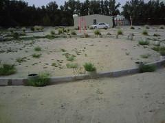 صورة0030 (lateefkuwait) Tags: في تاريخ المزرعة 452009