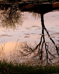 Reflections on the River    :) (**Ms Judi**) Tags: water beautiful grass wisconsin river midwest upsidedown branches awesome calming peaceful dreamy serene lovely magical treebranches soothing greengrass treebones peshtigoriver riversong msjudi peshtigowisconsin reflectionsontheriver judistevenson